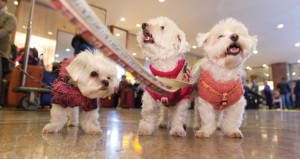 Pet-Friendly Hotels Prove Profitable