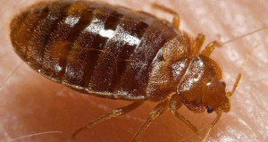 Bouncing Back After Bed Bugs