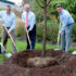 Wyndham Worldwide Celebrates One Million Trees Milestone