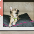 Aloft Tallahassee Launches Foster Dog Program