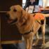 Kimpton Hotel Palomar Philadelphia Expands Pet Program