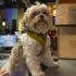 Hotels Help Dogs Find Their Forever Homes