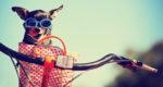 Canopy by Hilton - pet friendly