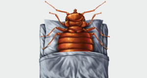 Bed bugs on mattresses