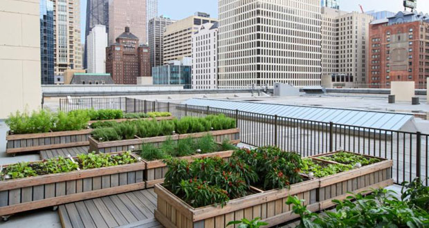 Chicago Marriott Magnificent Mile Celebrates 2.6 Million Pounds of Produce Saved in Chicago Through Imperfect Produce