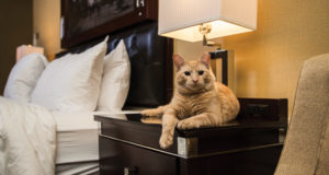 A Feline Resident Has Been Attracting Visitors to This Hotel for Almost a Century