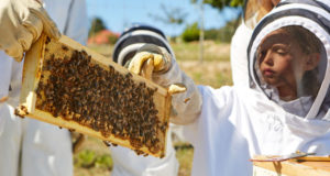 Nine Hotels Embracing Honey and Bees in Time for National Honey Month