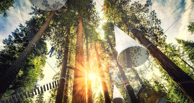Tall Forest of Sequoias, Radical Innovation