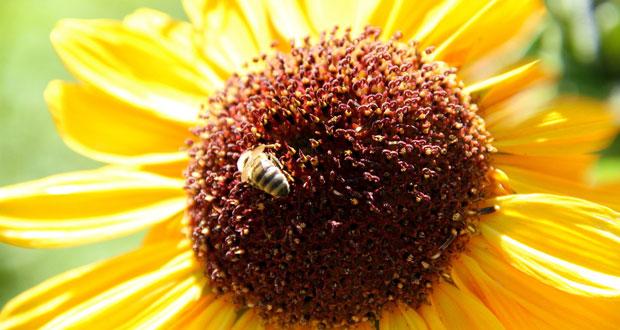 Calistoga Ranch Bee