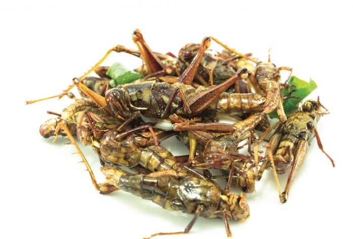 insects on the menu