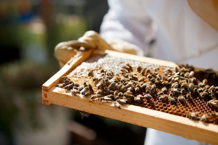 Beekeeping at Fairmont Olympic Hotel Seattle (Photo courtesy of Fairmont Hotels & Resorts)