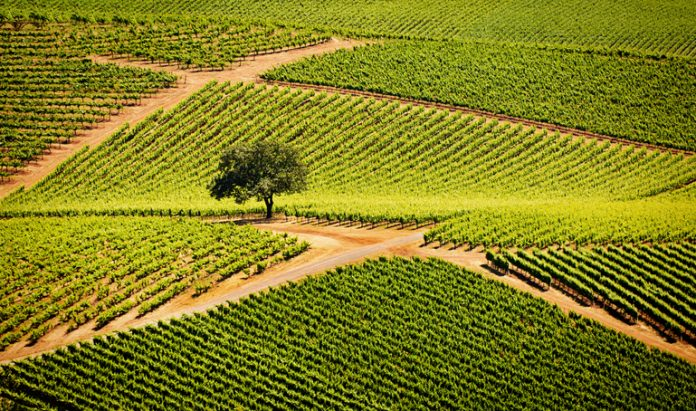 Sonoma Valley California Vineyard and Winery