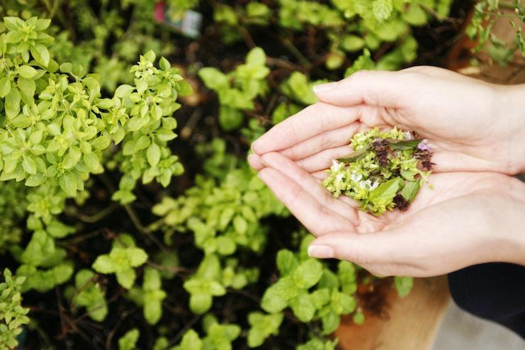 Herbs from the garden at Area 31, Kimpton EPIC Hotel, Miami (Photo credit: Duarte)